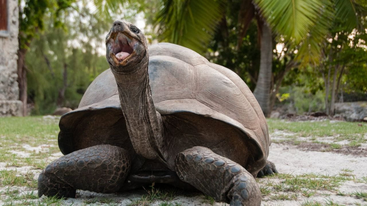 Aldabra: Once Upon an Island watch online