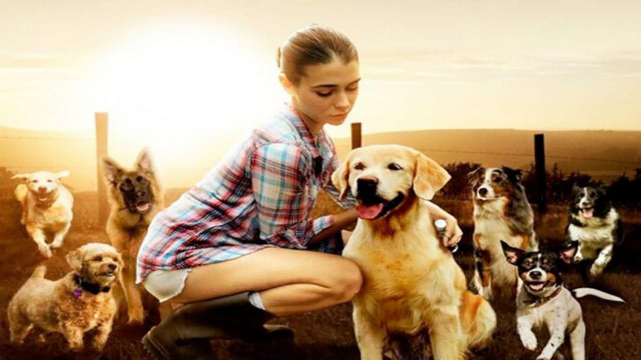 захисник собак дивитися онлайн